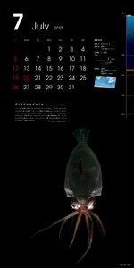 深海生物カレンダー2015年版