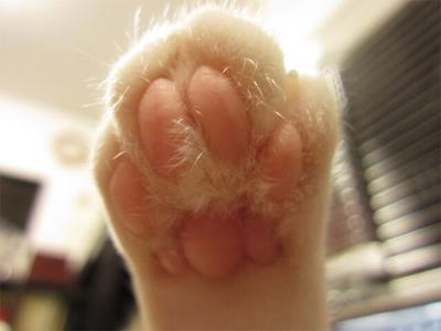 cat87.jpg