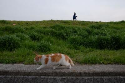 cat90.jpg