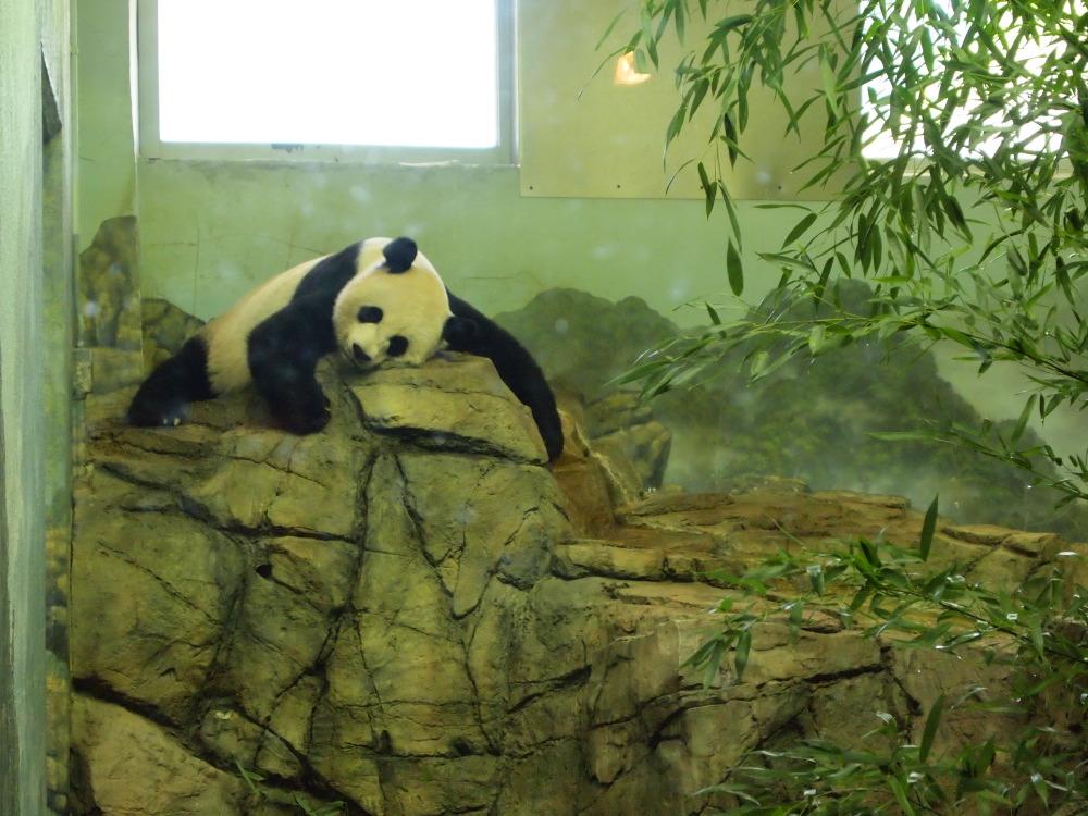 panda02_201409050544242f2.jpg