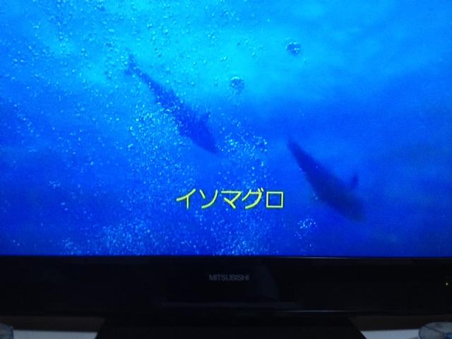 2014_05100005.jpg