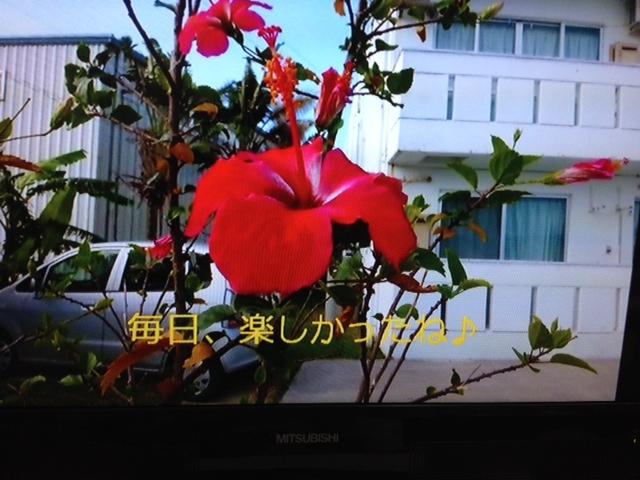 2014_05100015.jpg