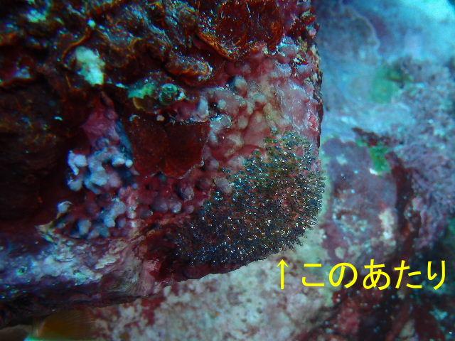 2014_07130044b.jpg