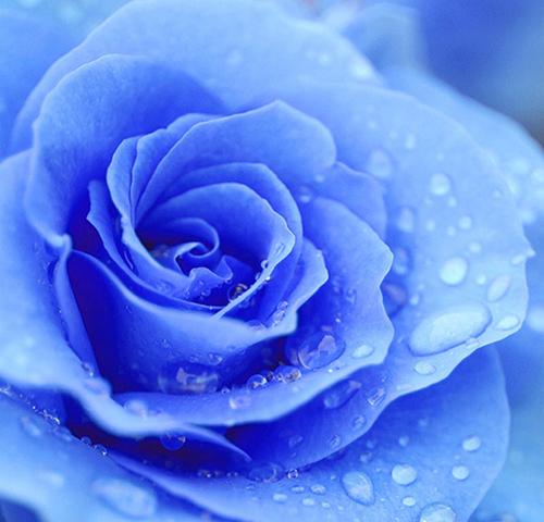 20141005薔薇