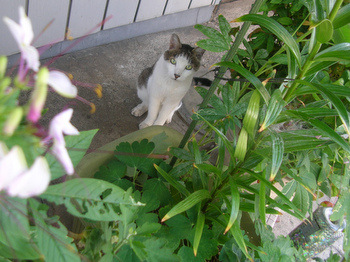 美しいネコ-3