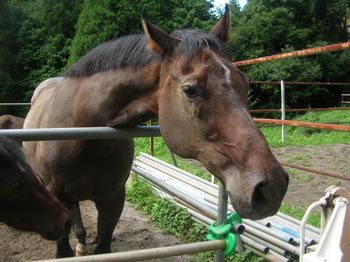 乗馬クラブの馬