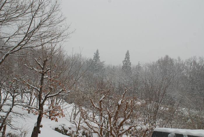 また、雪2