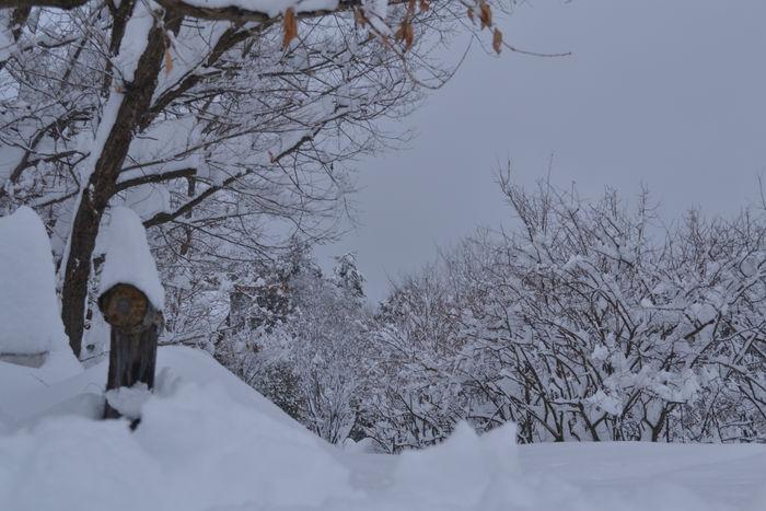 大雪が止んで6
