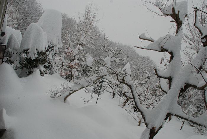 窓からの雪景色11