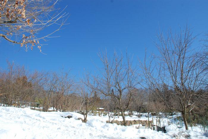 青空と畑の雪17