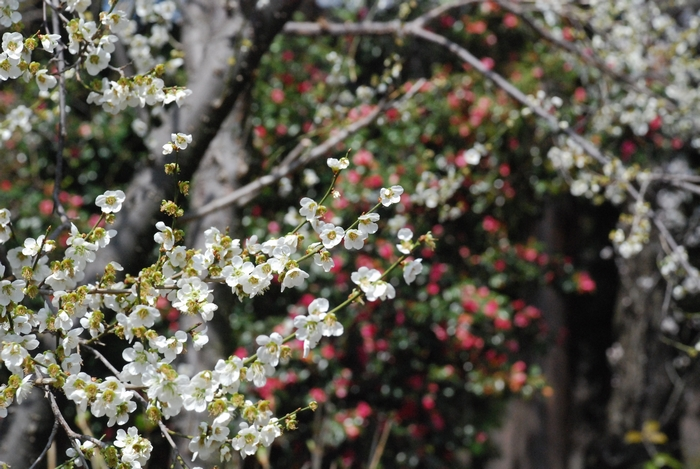 花の放光寺20