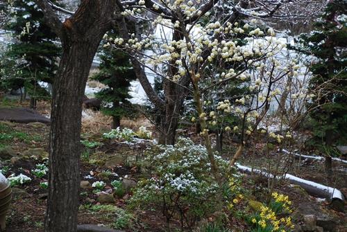 薄っすら雪景色3