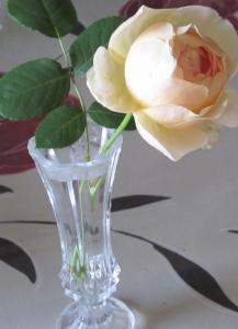 花瓶モリニュークス