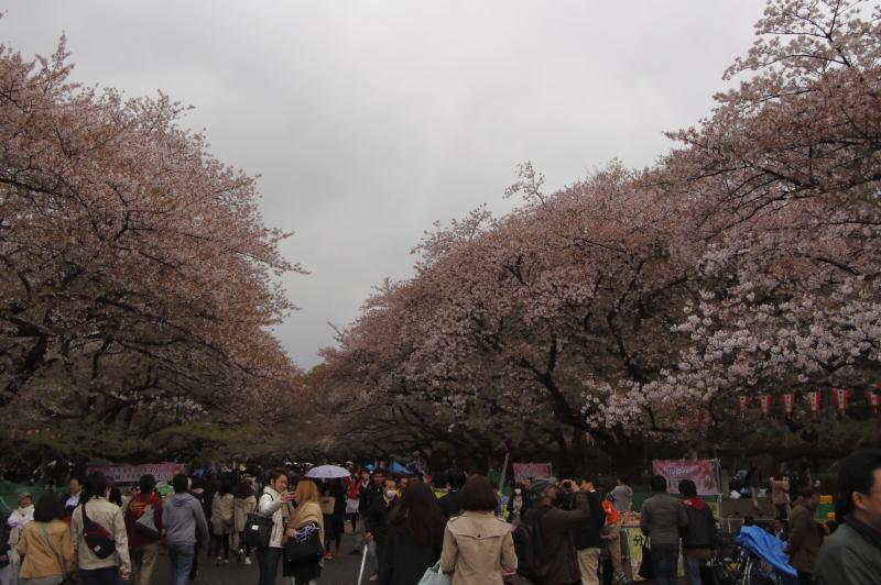 4.6上野公園