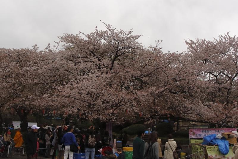 4.6上野公園 (2)