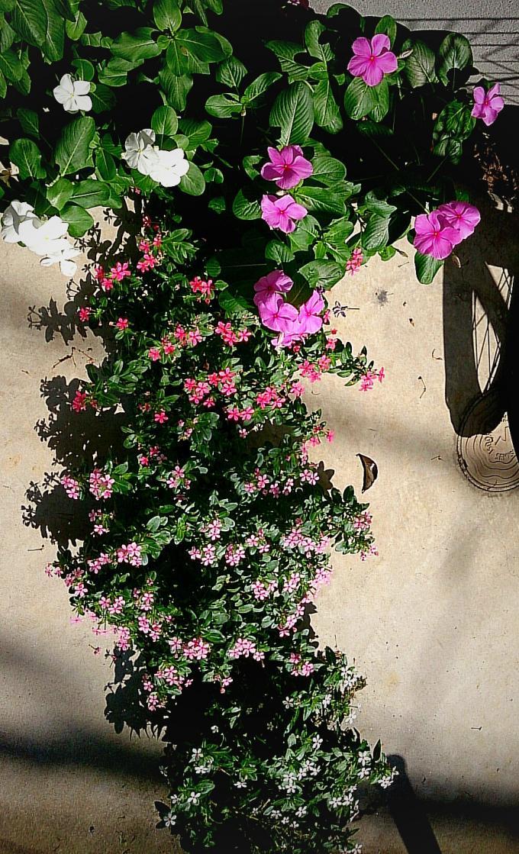 FLOWER_20140909