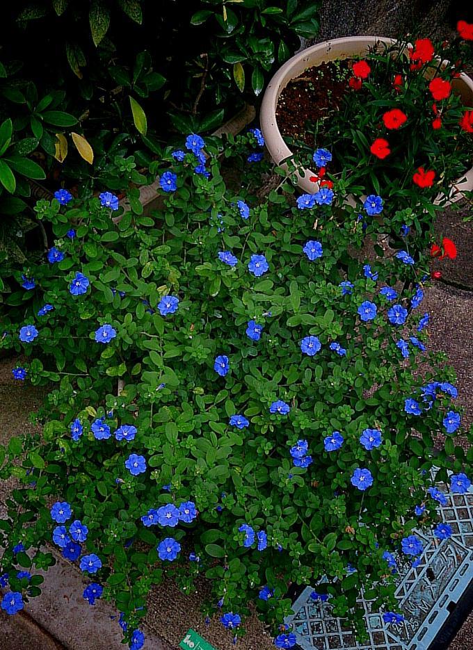 FLOWER_20140915