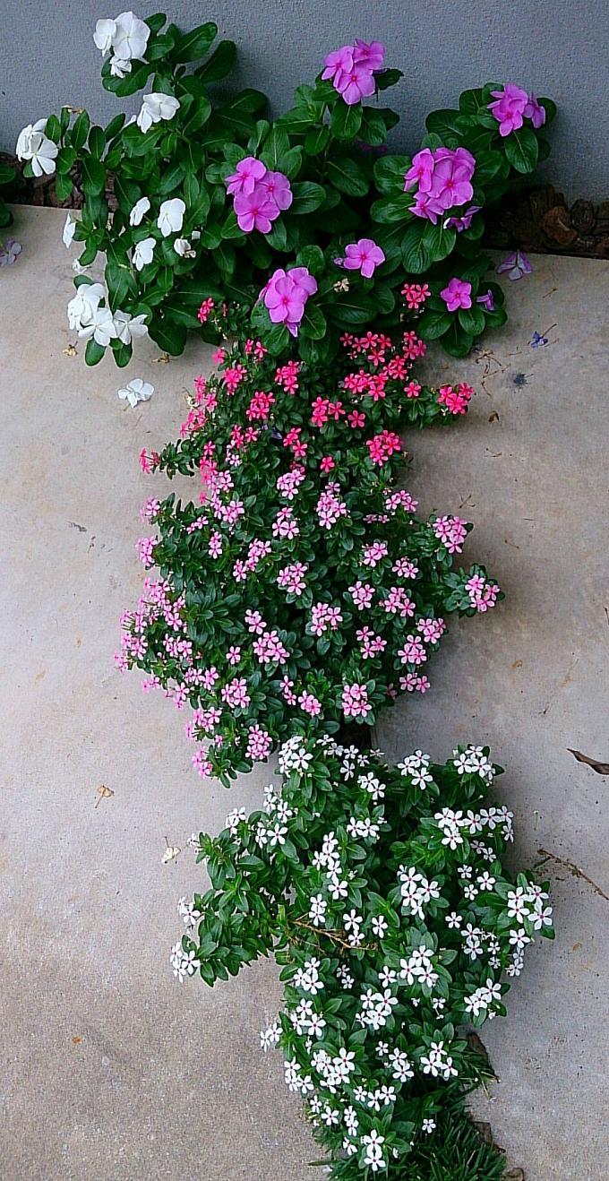 FLOWER_20140917