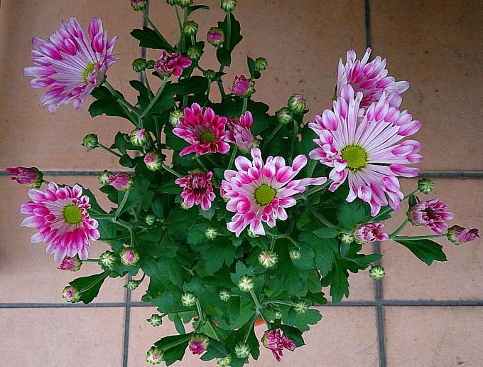 FLOWER_20140918