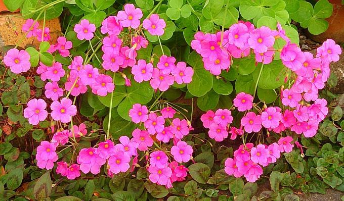 FLOWER_20140919