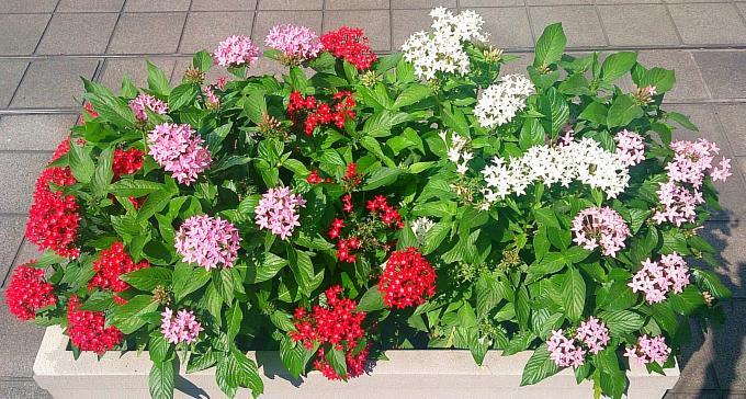 FLOWER_20140925