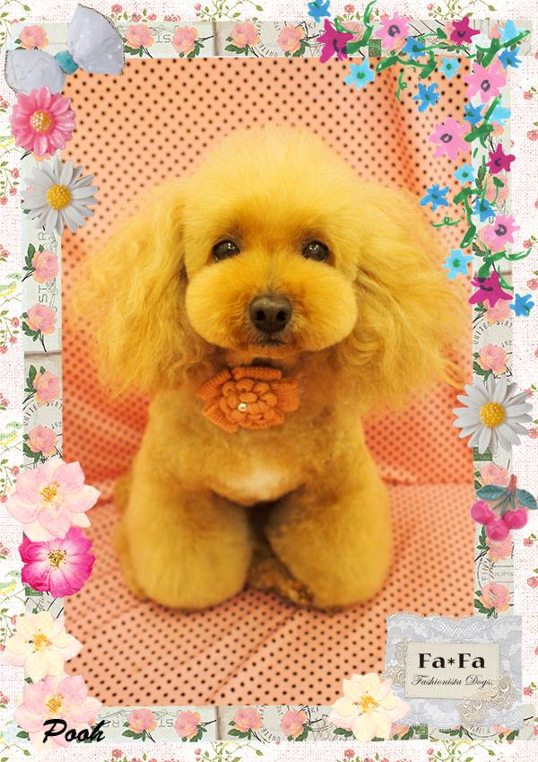 poohちゃん4-1