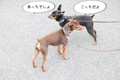 2014_07_19_9999_75.jpg