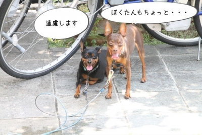 2014_07_26_9999_82.jpg