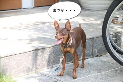 2014_07_26_9999_94.jpg