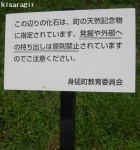 化石公園 (2)