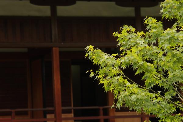 140831-kokura-32.jpg