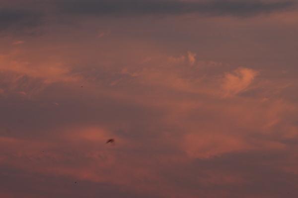 140907-sunset-13.jpg