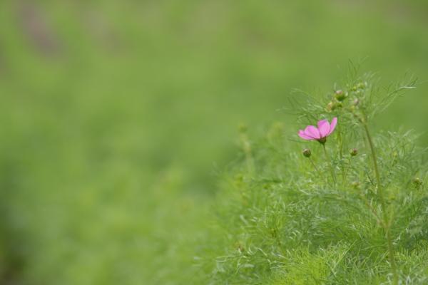 141004-aiboku-01.jpg