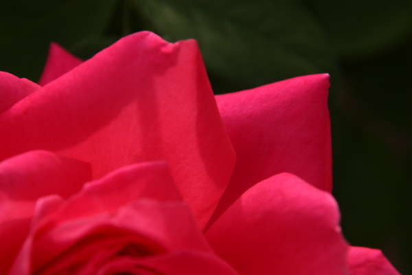 141012-rose-06.jpg