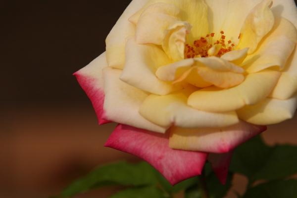 141012-rose-09.jpg