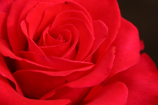 141012-rose-15.jpg