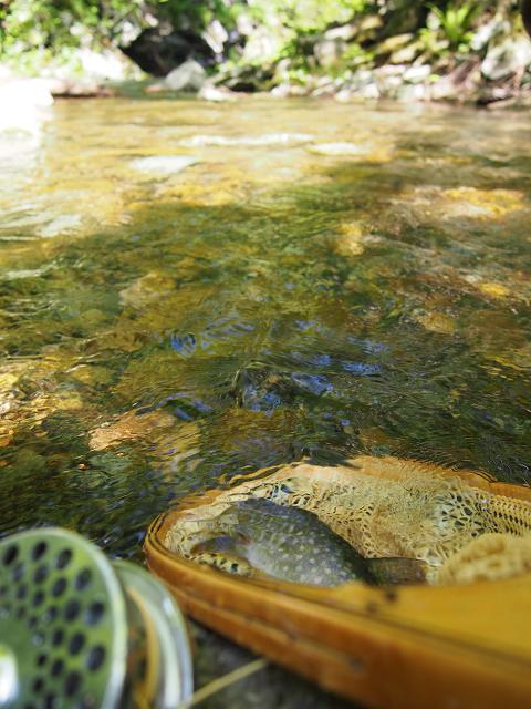 2014の川とイワナ
