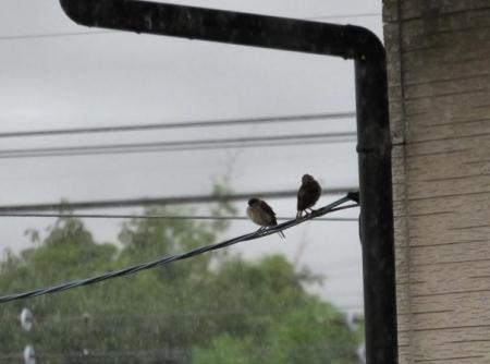 雨の日の点描 大木町 038