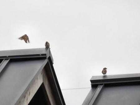 鳥刺し 028