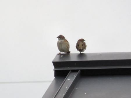 鳥刺し 024
