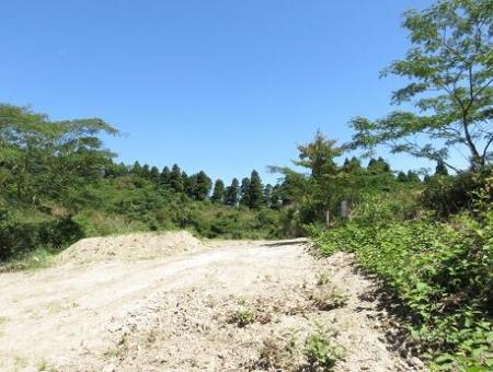樫の木原湿原 前津江林道 098