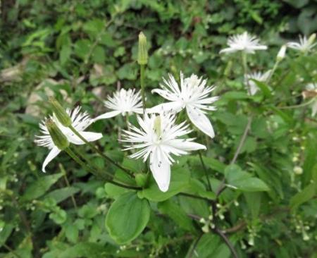 奥平谷の花 046