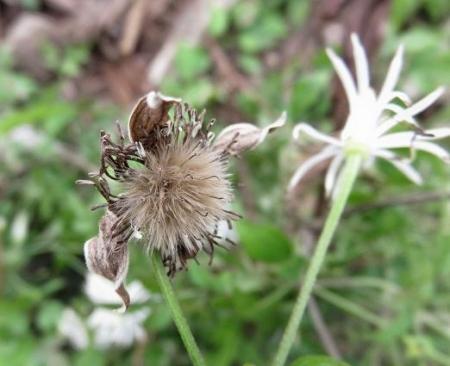 奥平谷の花 079