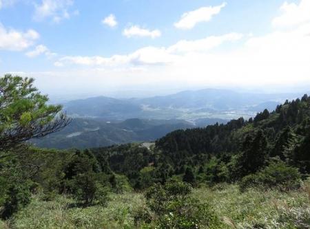 クサヤツデ天山 127