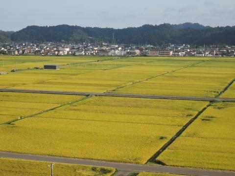 神谷米の圃場