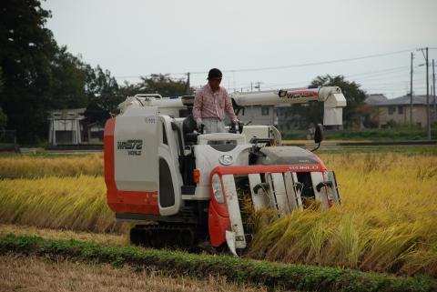 神谷米収穫