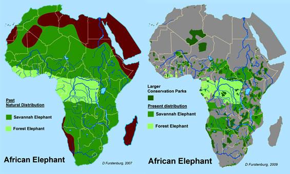 Maps1-elephant.jpg