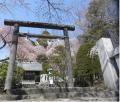 gokokusakura2.png