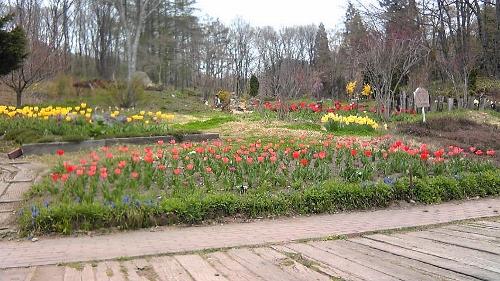 花畑 (500x281)