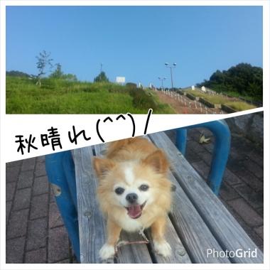 PhotoGrid_1410482962200.jpg